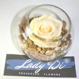Regalo Dia Madre: Rosas Preservadas Eternas Inmortalizadas