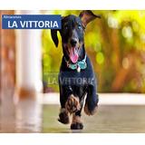 Correa Para Perros Mascotas Regulable Varios Colores
