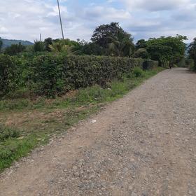 Finca 90135 M En El  Cantón Ricaurte  Prov De Los Rios