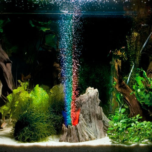 Acuarios raros creativos e ingeniosos aquarium morelia for Peces de colores para acuarios